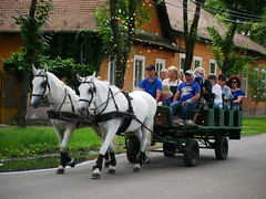 Promenade / Sétakocsikázás (FotoVideo magazin, Hungary) Tags: 45200mm promenade sétakocsi ló horse wekerle wekerletelep budapest