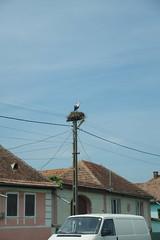 imgp9951 (Mr. Pi) Tags: animals village birds nest romania cata cața