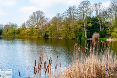 OstPrk_DSC8755 (Nick Woods Photography) Tags: water waterscape waterreflections waterscene landscape trees treereflections freshwater pond pondscene lake lakescene rushes bullrushes sunny sunshine nt nationaltrust nationaltrustosterleypark osterleypark osterley