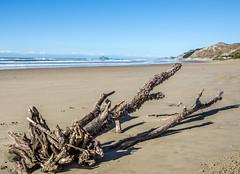 Driftwood (Kiwi-Steve) Tags: nz newzealand nikond7200 nikon northisland hawkesbay driftwood beach sea landscape