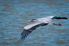 Great Blue Heron (Eeyore Photography) Tags: robertjacksonphotography greatblueheron nikkor200500mmf56 eeyorephotography nikon nikond750 wildlife bird