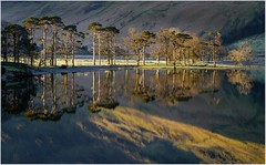 First light at Buttermere (Hugh Stanton) Tags: reflections trees lakes appicoftheweek
