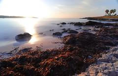 Playa Sa Coma / Mallorca (dannysch) Tags: mittelmeer canon eos 6dmkii ef 16354 sonnenaufgang beach strand spain spanien mallorca balearen sunrise