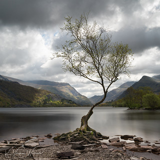 Lonely Tree Square-