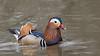 Mandarin Duck (Eija Fogelholm) Tags: aix aixgalericulata mandariinisorsa mandarinduck
