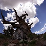 Clouds Passing Over Bristlecone Pines (looking south) thumbnail