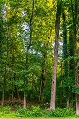 My Childhood Woods (hilarybachelder) Tags: greenwaylandtrustprotected childhood wood woods princeton a7rii beautiful composition color trees tree wideangle 35mm fe35f14 sigma art sigmaart b c depthoffield dof fullframe frame focus illuminated leadinglines light lines landscape leaves sunlight mirrorless nature ngc peaceful prime pointofview pov nostalgia quiet tranquil sony sonya7rii season vivid green newjersey mercercounty summer june verte verdent