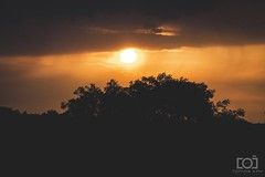 182/365 - Sunset Silhouette (Forty-9) Tags: photoaday tree 2018 efs1785mmf456isusm forty9 3652018 365 bristol sunday 1stjuly2018 tomoskay silhouette lightroom efslens 01072018 canon sunset eos60d project3652018 182365 day182 yellow project365 orange july