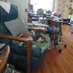 dog Bella 7 9 18 thumbnail