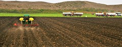 July2Image3280 (Michael T. Morales) Tags: farm green agriculture farmequipment rows furrows montereycounty salinasvalleyag harvest soil