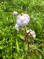 Weedy? ([S u m m i t] s c a p e) Tags: springbrooknationalpark hiking trailrunning numinbah newsouthwales australia