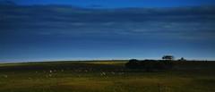 Quaraí-RS, Brasil (Eduardo Amorim) Tags: ovelha ovelhas carneiro carneiros oveja ovejas sheep mouton moutons pecore schafe cordeiro cordero campo field champ fronteira pampa campanha riograndedosul brazil brésil quaraí brasil sudamérica südamerika suramérica américadosul southamerica amériquedusud americameridionale américadelsur americadelsud eduardoamorim