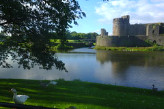 Caerphilly Castle, West End (Dave Roberts3) Tags: wales caerphilly glamorgan castle building bird goose reflection reflecting shade shadow sky clouds bridge historic caerphillycastle