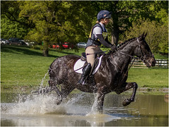 Equestrian Event (Paul West ( pwest.me )) Tags: equestrianevent floorscastle horse scotland naturelovers wildlife nature wildlifepics macro wildlifepictures wildlifephotographer wildlifephotography naturephotography naturepictures naturephotographer birdphotography wildlifephoto animal naturephotoportal poultonphotosoc photography wildlifeplanet intothewild wildlifeperfection naturephoto naturepics naturepic followme naturecollection natureseekers facebook