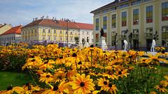 Virágözön a városi nyárban (Szombathely) (milankalman) Tags: yellow summer city house building