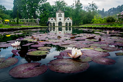Lilly Pond (Tony Shertila) Tags: europe britain wales bodnantgardens nationaltrust pond lilly building structure folly water flower 20180527112828walesbodnantgardenslr
