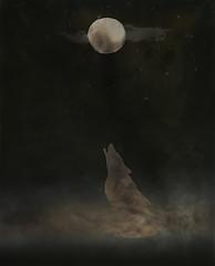 Hoo-Yip-Hoo (micalngelo) Tags: alternativephotography cameraless cameralessphotography chemigram photogram coyote howl moon manray alternativeprocess