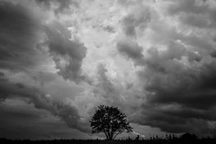 Under the clouds (PaxaMik) Tags: undertheclouds clouds cloudy sky nuages cielnuageux tree arbre silhouette noiretblanc noir n§b blackandwhitephotos black orage storm plateauderetord retord frenchcountry countryside country mountains