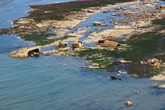 shipwreck (kokoschka's doll) Tags: ship shipwreck rock sea northsea whitby coast
