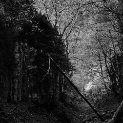 "ORDESA 3 Pirineos Huesca (L. Vital [www.linovital.com]) Tags: art blancoynegro paisaje bosques nationalpark blackandwhite bw europe forest landscape light lino ""lino vital"" nature photo photography photos spain trees vital"