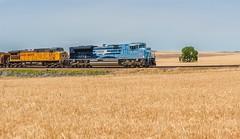 RR-20180702-LimonSub-121-e (skyviewtim) Tags: bennett coalload coloradorailroads coloradotrains up1982 wheat wheatfield
