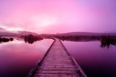 Purple Mirror (ajecaldwell11) Tags: xe3 sunrise ankh purple water fujifilm light reeds hawkesbay newzealand pekapekaswamp mirror reflection sky boardwalk wetlands caldwell dawn clouds
