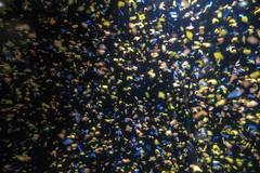 tiny plastics... (2/5) (steveleenow) Tags: vancouver vancouverbc vancouverbccanada vancouverbritishcolumbia vancouverbritishcolumbiacanada britishcolumbia canada vancouveraquarium aquarium plastic plastics waste junk trash