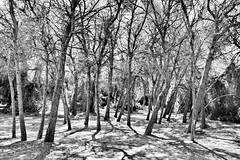 Summer in the dry woods (gerard eder) Tags: world travel reise viajes europa europe españa spain spanien valencia natur nature naturaleza naturschutzgebiet nationalpark natural woods forest wald bosque trees bäume àrboles landscape landschaft paisajes panorama outdoor