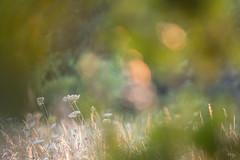 Feu d'artifice naturel du 14 juillet (Richard Holding) Tags: bokeh couchersoleil eure m43 nature normandie normandy olympus omd sunset