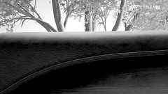 Resources (Mr. Pebb) Tags: lincolncontinental lincoln american tenthgeneration v6 frontengined fourseater fourdoor 4seater 4door awd allwheeldrive 4wd northamerican america car still stillshot stillimage stillpicture stock stockshot forza7 forzamotorsport7 fm7 xboxone xboxonex xbox ms microsoft turn10studios t10 turn10 videogame videogamecapture screencapture screenshot imagecapture photomode tree blackandwhite bw blackwhite desaturated interior inside closeup close 4k 4kgaming 3840x2160 169 landscapeformat landscapemode