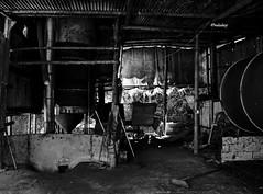 Brasil - MG, Carangola - Secador de café! (jvaladaofilho) Tags: minasgerais brasil br valadaoj carangola rural secadordecafe cafe blackwhite monochrome pretoebranco monocromatico pb