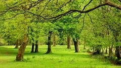 Spring Greens (RoystonVasey) Tags: canon eos m 1855mm stm zoom wales brecon beacons bbnp parc cenedlaethol bannau brycheiniog y mynydd du black mountain camarthen fan tree woodland