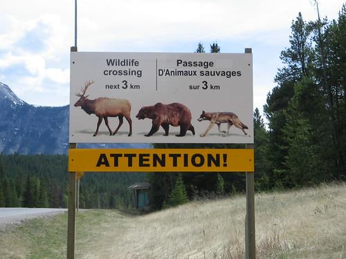 """Wildlife crossing"" Canada 2006"