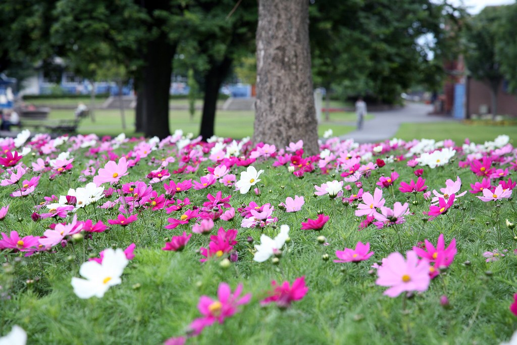 FLOWERS - PEOPLES PARK