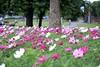FLOWERS - PEOPLES PARK