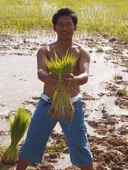 Village Life planting rice August 2006