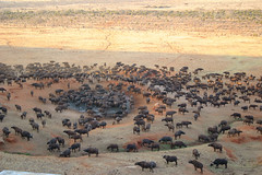 """This reminds me of my safari in Africa. Somebody forgot the corkscrew and for several days we had to live on nothing but food and water."" W.C. Fields (**ANNE) Tags: topf25 1025fav 510fav circle buffalo kenya tsavo savanna tsavoeast tf25 buffalos"