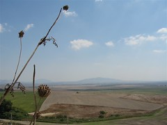 Valley of Megiddo (mockstar) Tags: sky mountain field grass clouds landscape israel thistle horizon middleeast valley crops armageddon davidpoe megiddo meggiddo
