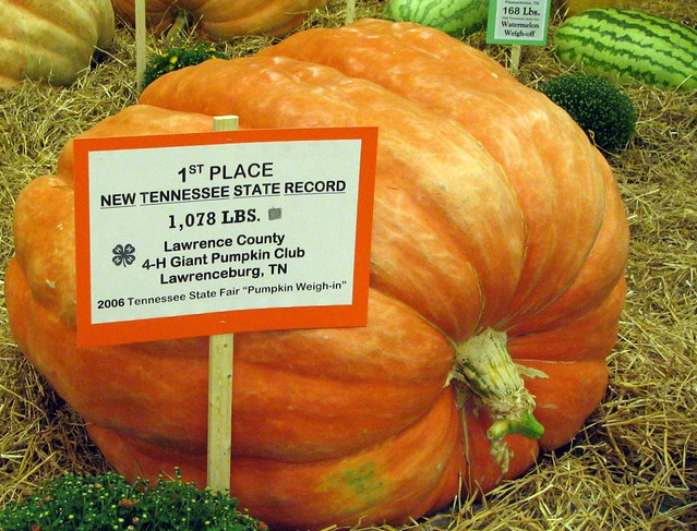 TN State record-setting pumpkin at the State Fair