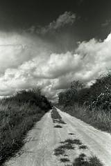 My long way back home ... (PeKai) Tags: blackwhite nikon 150 explore apx100 rodinal nikonf3 hunsrueck hunsrck 123bw pekai abigfave