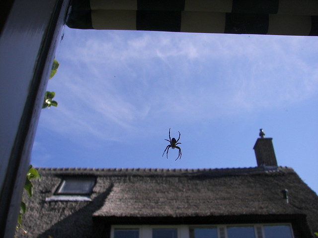 Spiderman goes for the neighbours