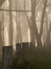 Fog, Fence and Trees (Ev Lloyd) Tags: trees grass fog fence bravo kkfav glenalvie potwkkc6