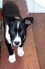 Adoring Melanie (Nicarra) Tags: love puppy bigeyes melanie instantfave interestingness379 i500 explore28sep2006