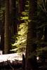Peek A Boo (red321) Tags: california trees green landscape may2005 sequoianationalpark sequoias kingscanyonnationalpark utatainhalf redinkphotography ©allrightsreservedseanscanlon
