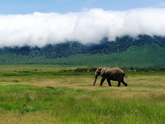 Elephant and Cloud (geoftheref) Tags: world africa travel wild sky elephant green heritage nature animal de landscape tanzania la site interestingness interesting flickr wildlife wolke paisaje paisagem unesco safari ngorongoro crater afrika serengeti nuage nuvem paysage landschaft nube paesaggio sites landschap wolk  frica tanzanie lafrique tanznia  geoftheref dellafrica   afrikasafari