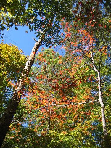 Autumn foliage, Land Between the Lakes