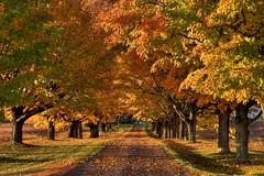 Autumn (iJohn) Tags: tag3 taggedout bravo tag2 tag1 kiss2 mireasrealm kiss3 kiss1 kiss4 gtaggroup goddaym1 kiss5 abigfave