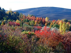 Fall Paint Palette (Roger Lynn) Tags: fall colors moscow arboretum idaho universityofidaho palouse