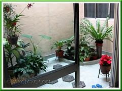 Our courtyard garden setting in October 2006, with greens and the red poinsettia