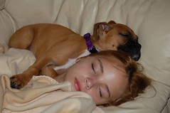 sleepy time with Boxer Puppy (orclimber) Tags: sleeping dog cute puppy puppies child allie fawn boxer boxerpuppy boxerpuppies instantfave 5photosaday impressedbeauty boxerpuppiesbigandlittleones